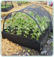 Deluxe Raised Bed With Frame