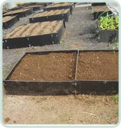Standard Raised Beds In a Row