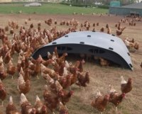 recycled plastic field hen shelters