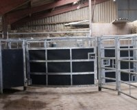 recycled plastic stockbord cattle race for sale