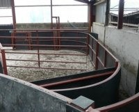 stockbord cattle race iae for sale