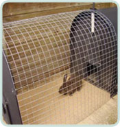 recycled plastic rabbit hutch