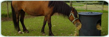 Pet Products & Equestrian