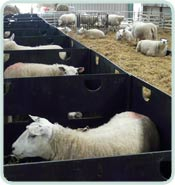 Deluxe Sheep Pens in a row