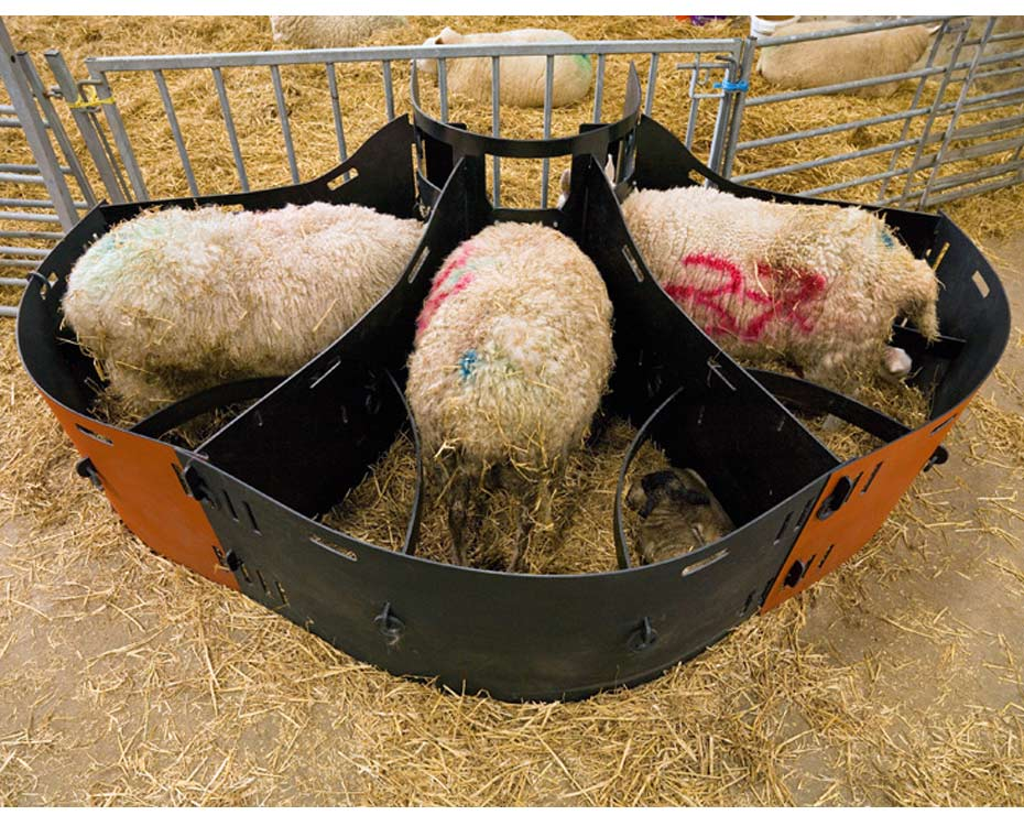 3 Ewe Lamb Adopter