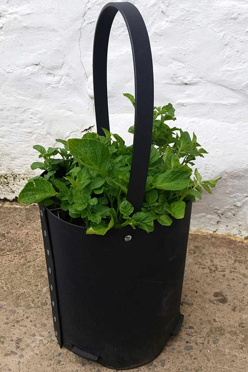 Vegetable Planter For Patio Recycled Plastic Turbo Planter