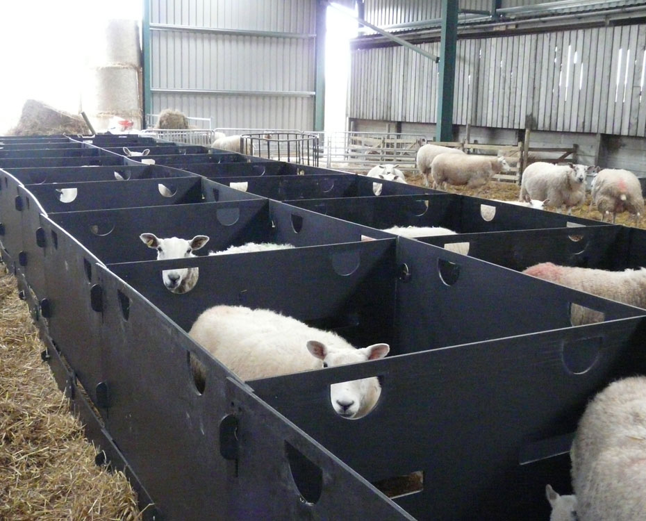 Indoor Lambing Pens Deluxe Sheep Pens Back To Back