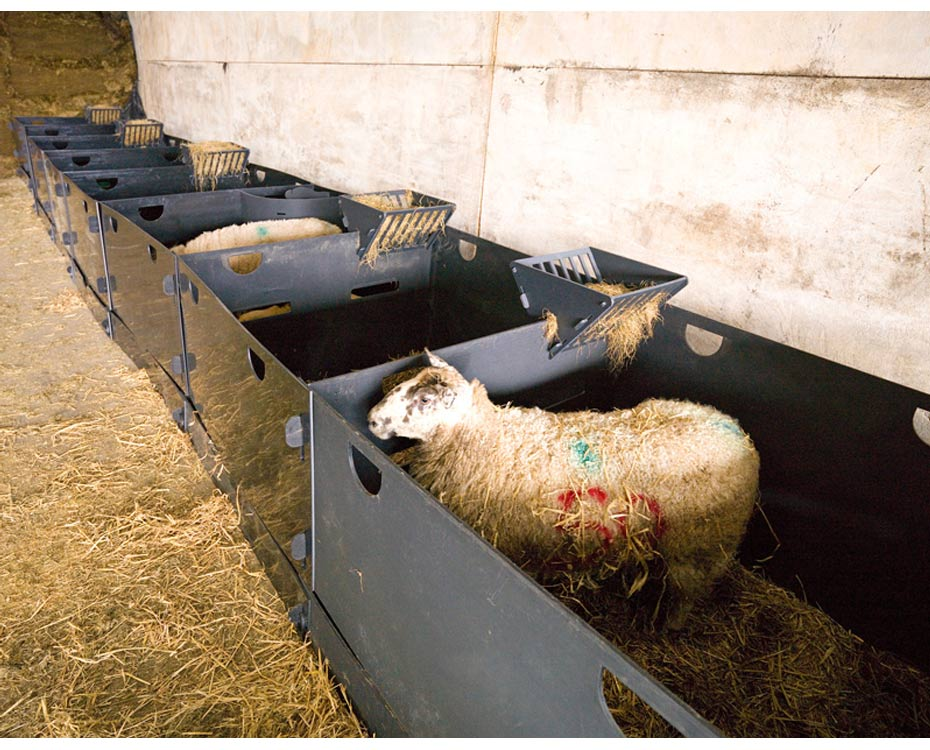 Solway Products Sheep Pens Deluxe Sheep Pens In A Row