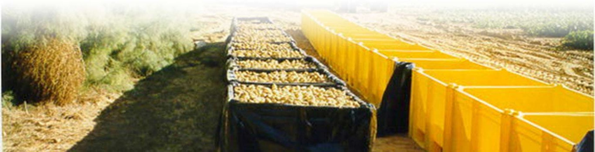 Plastic Dolav Boxes Filled With Potatoes In The Field