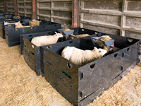Deluxe 5 ft. x 5 ft. Sheep  Pens